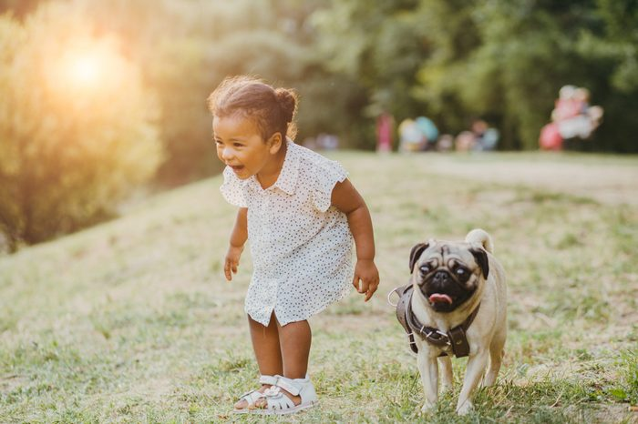 Emotion laughing full body portrait of hispanic toddler girl two years old with her pug dog walking on the grass in summer time in sunset.