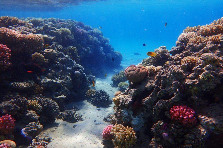koralový útes v Egypte s farebnou prírodou