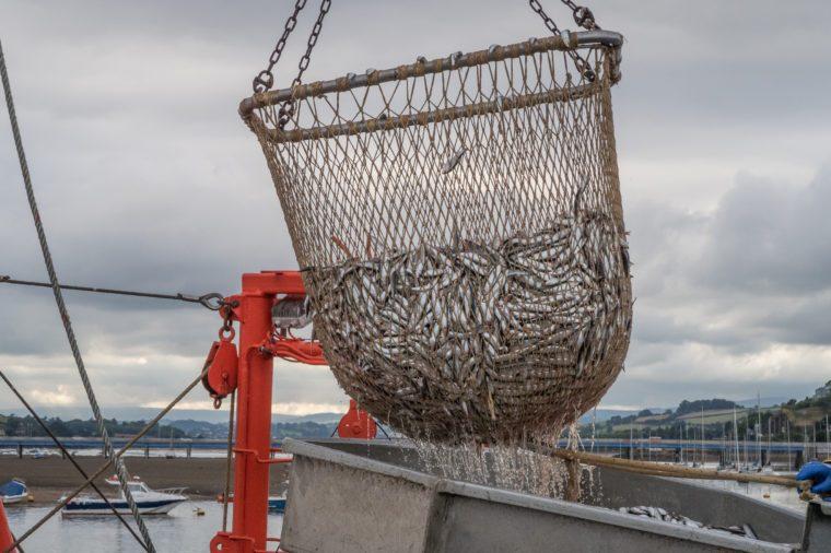 Rybárska sieť plná sardiniek