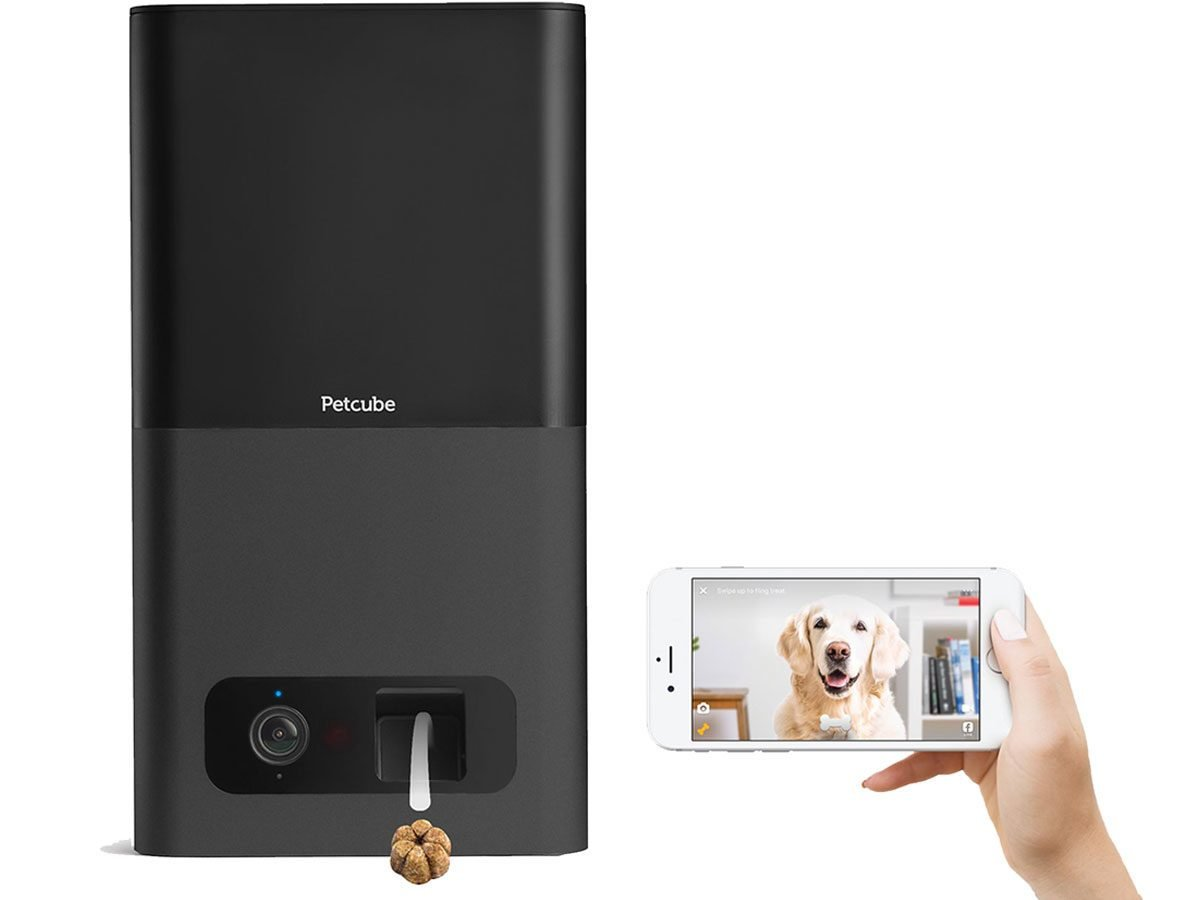 Deal of the Week: This Wi-Fi Pet Camera Is Over 50 Percent Off