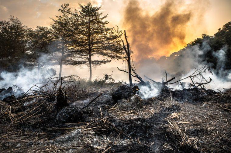 Lesné požiare.