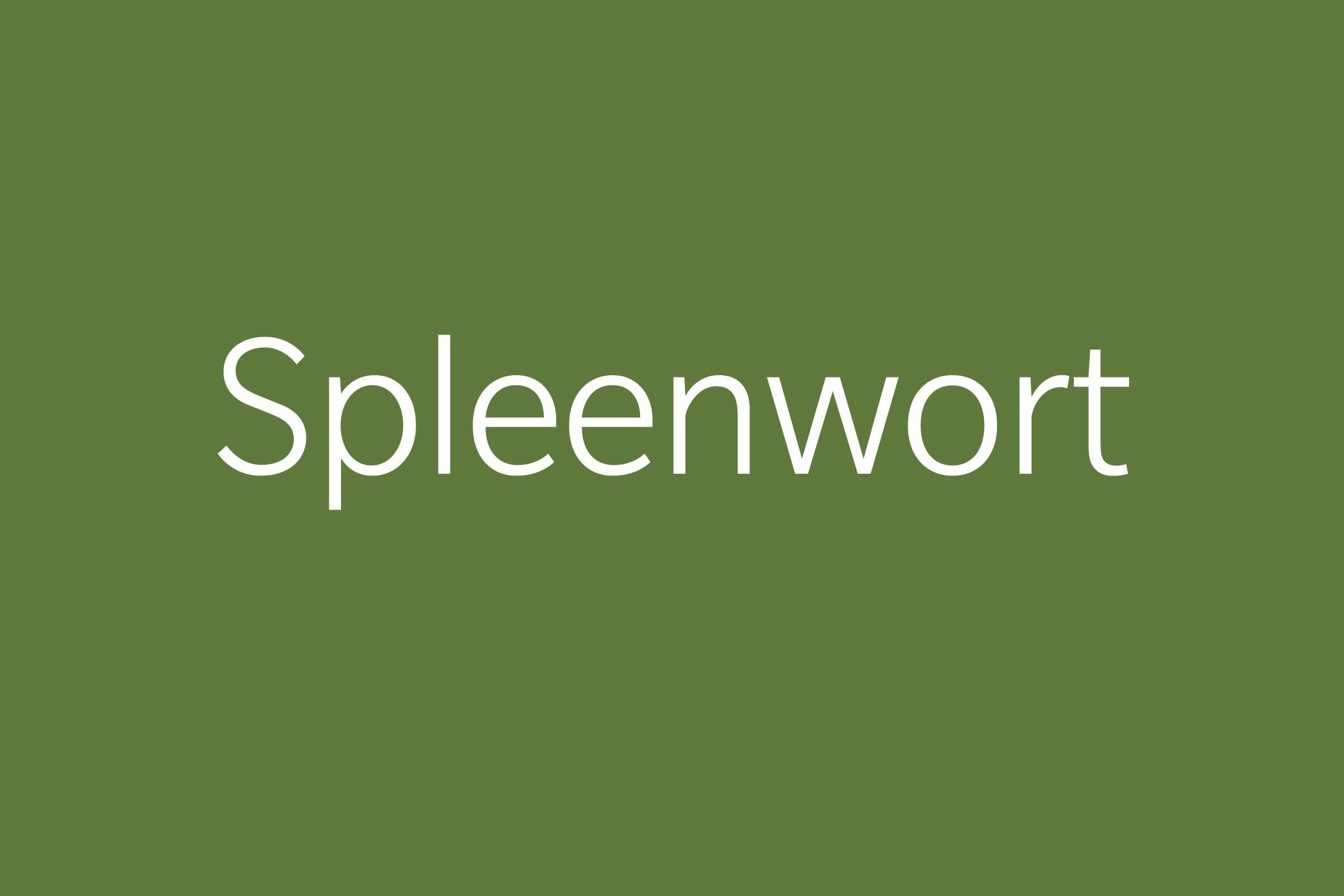 spleenwort funny word Funny words