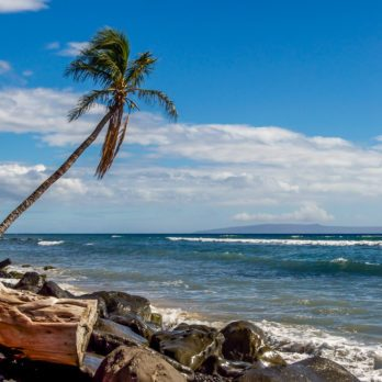 A lone coconut palm tree leans into the wind and waves on a rocky beach in Maui.