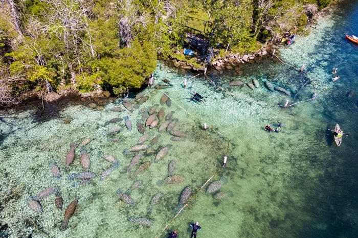 Swimming with manatees at Crystal River, FL