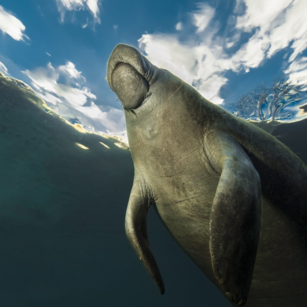 Our Favorite Manatee Photos of All Time