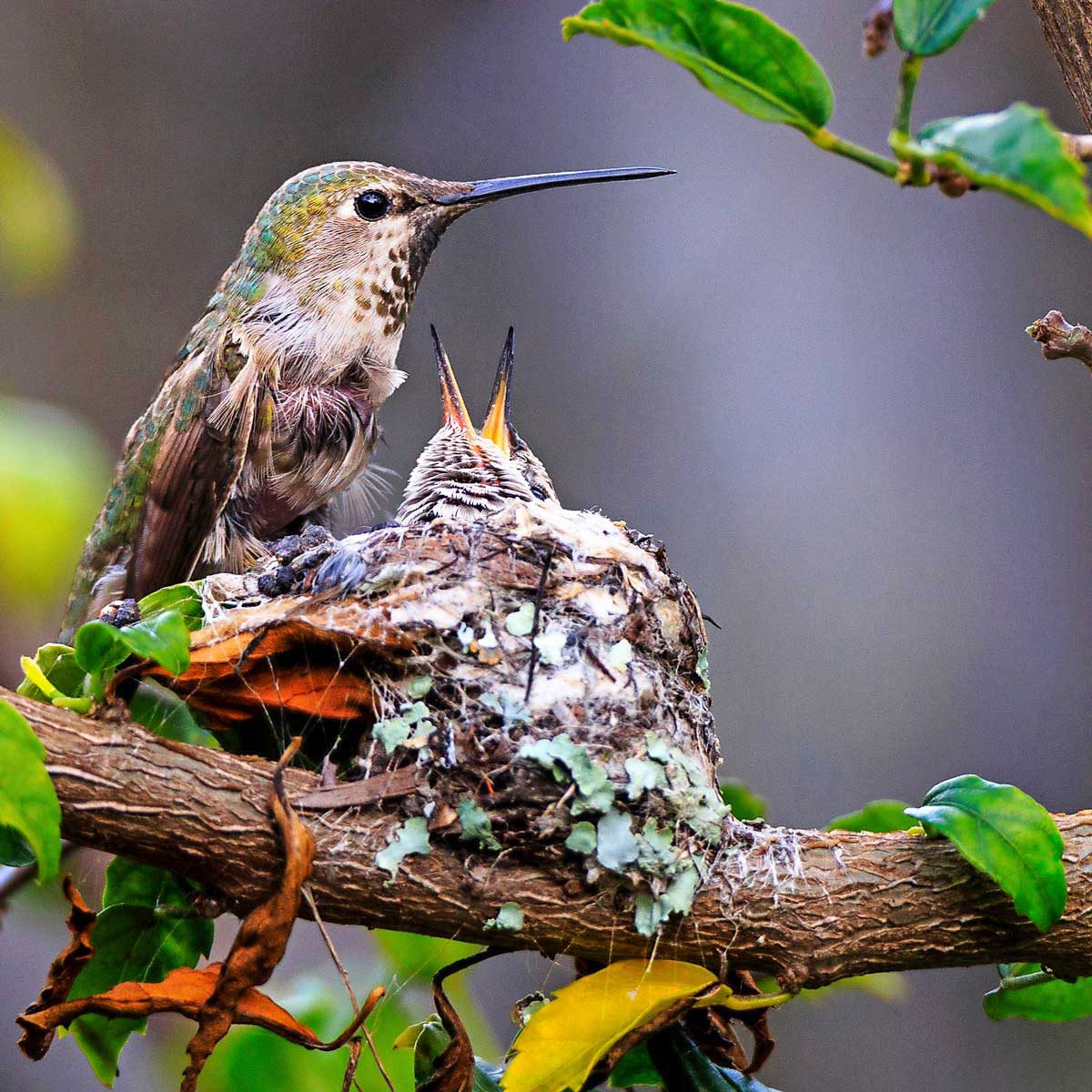 third place hummingbird