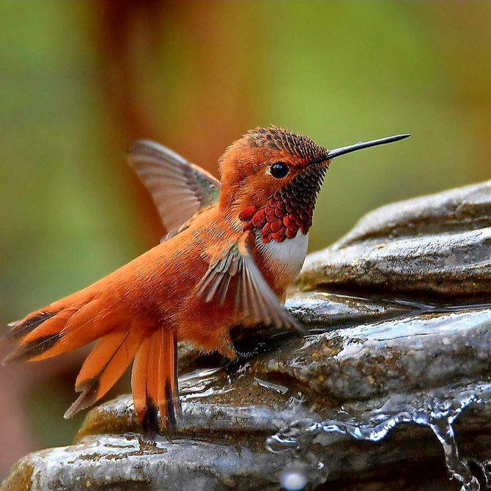 second place hummingbird