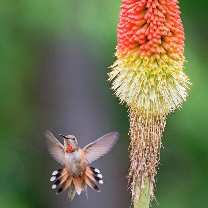 hummingbird putting on a show