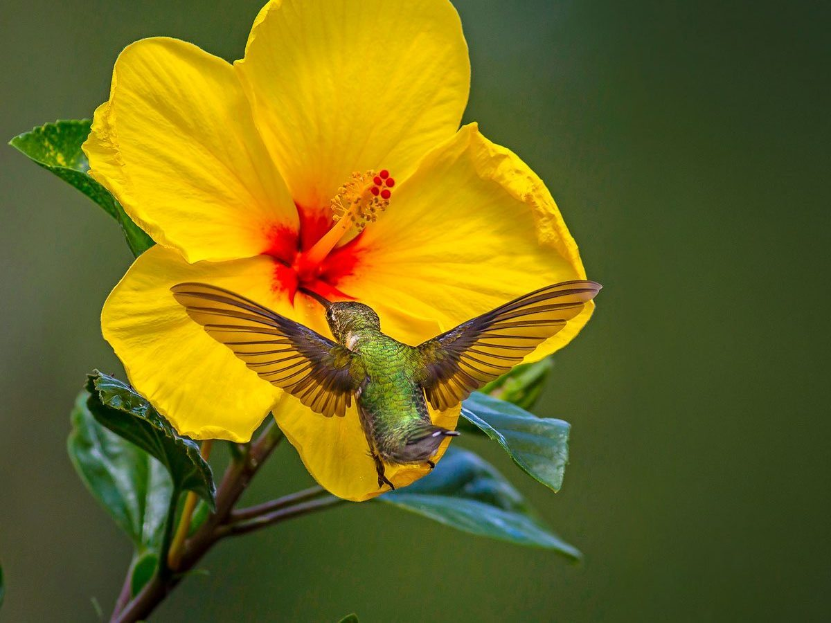 14 Fantastic Hummingbird Photos You Just Have to See
