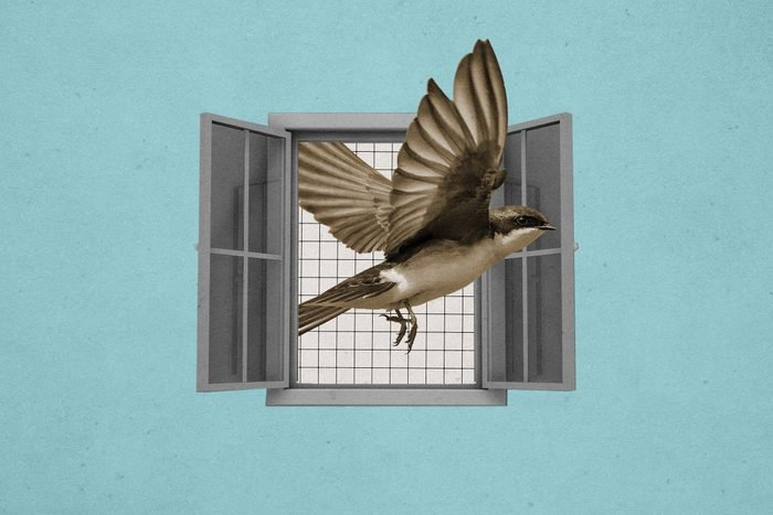 Birdisword