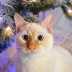 30 Adorable Pets Filled with Christmas Spirit