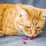 How to Give a Cat a Pill—And Actually Get Your Cat to Swallow It