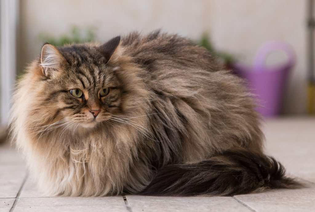 Pets To Get If You U0026 39 Re Allergic To Cats And Dogs