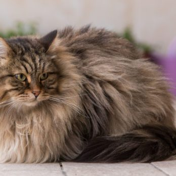 8 Pets to Get If You're Allergic to Cats and Dogs