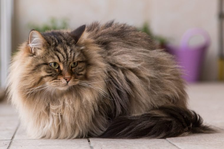 Pets To Get If You Re Allergic To Cats And Dogs Reader S