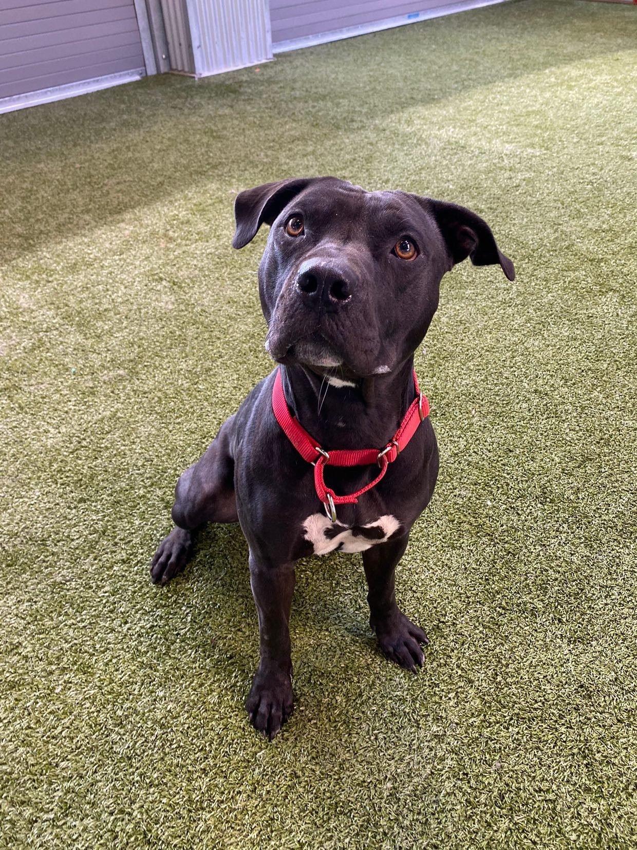 dog for adoption
