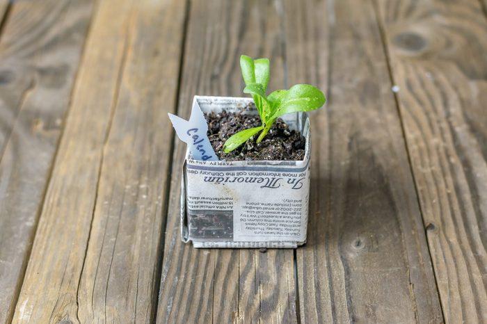 newspaper plant pot
