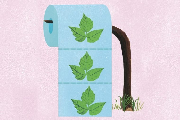 poison ivy toilet paper illustration by ellen weinstein