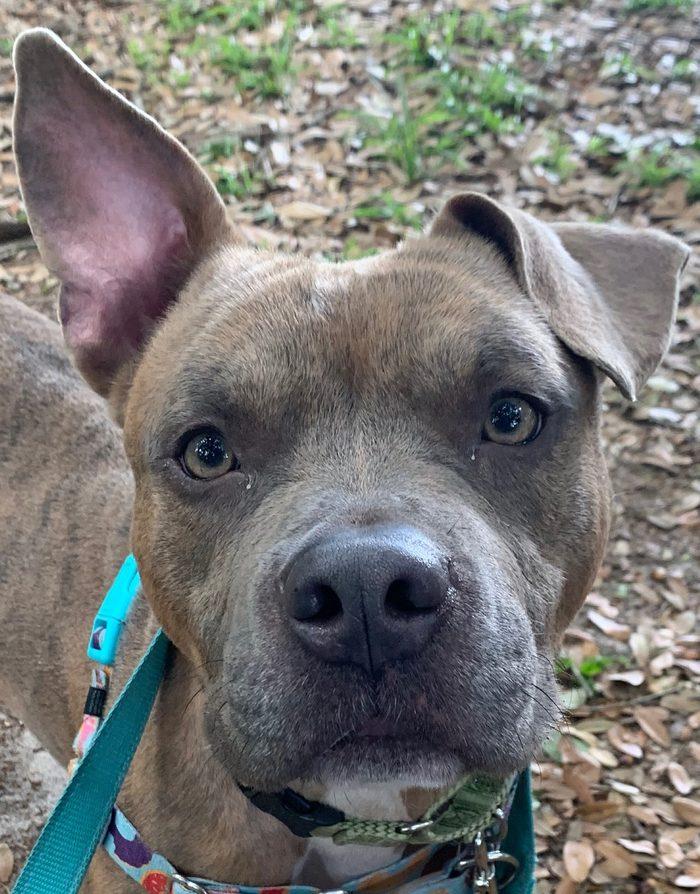 tez dog for adoption