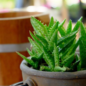How to Recycle Your Favorite Plants