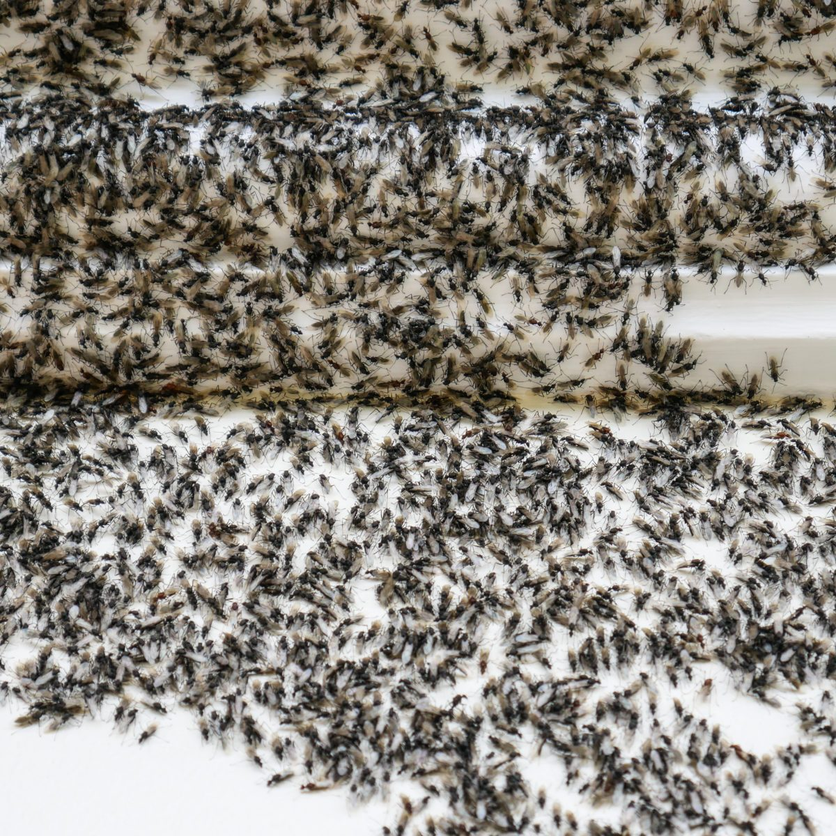 Simple Solutions to Help You Get Rid of Ants for Good
