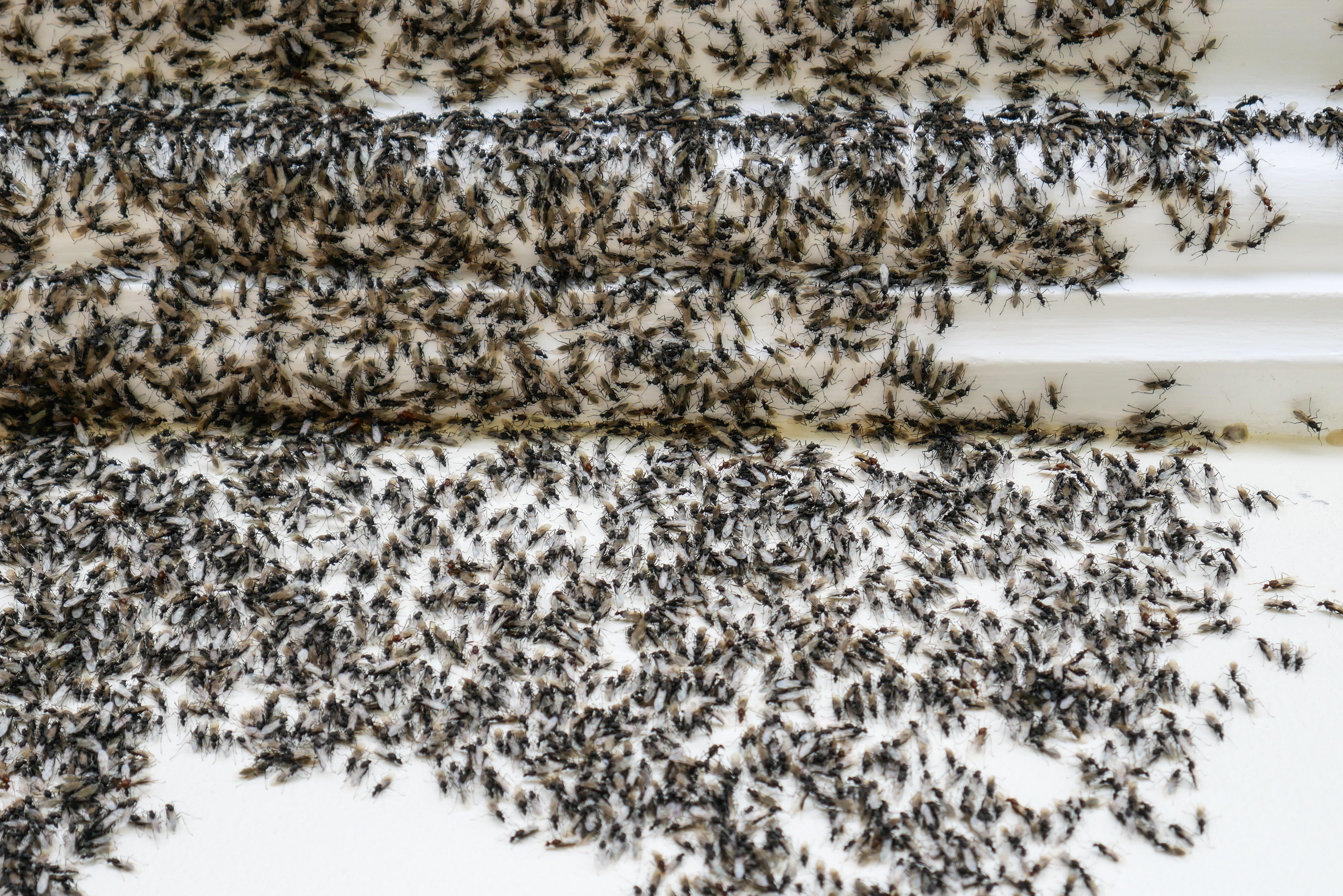 What Kills Ants Solutions For How To Get Rid Of Ants