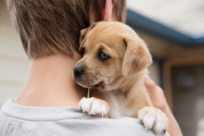 Young Boy Holding His New Terrier Mix Puppy