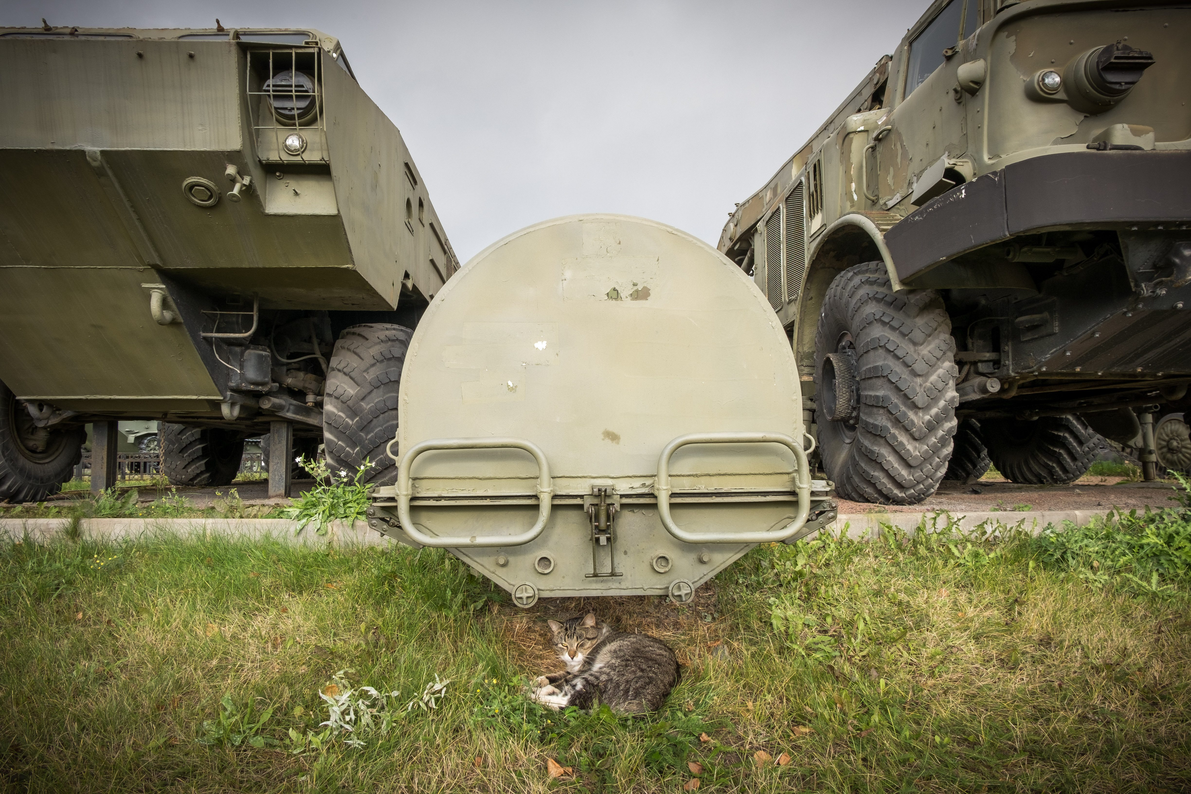 Cat lying under a container for a ballistic missile