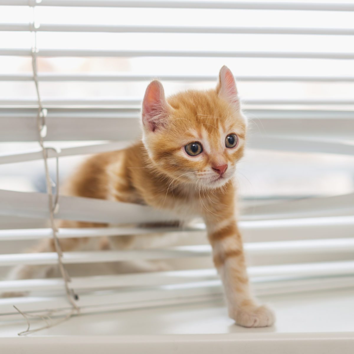 10 Things You Shouldn't Own If You Have a Cat