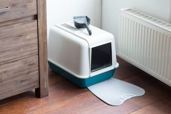 Cat litter box in a dutch house