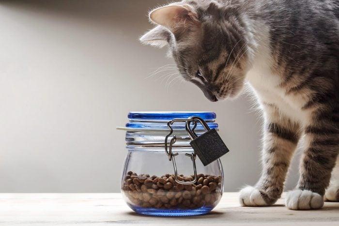 cat treats, cat diet