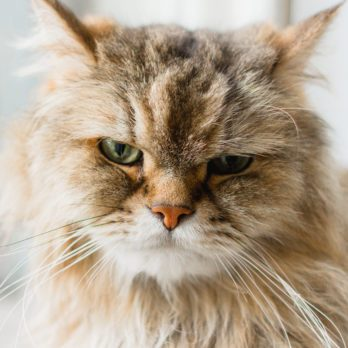 4 Reasons Your Cat Is Cranky