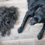 12 Pet Hair Removers That Really Work