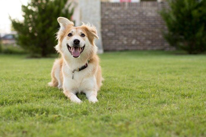 Happy Dog at the Dog Park