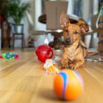The 24 Best Dog Puzzle Toys for Bored Dogs