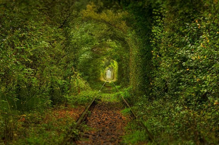 The tunnel of love, Romania. A natural tunnel formed by trees along a rail train in Transylvania.