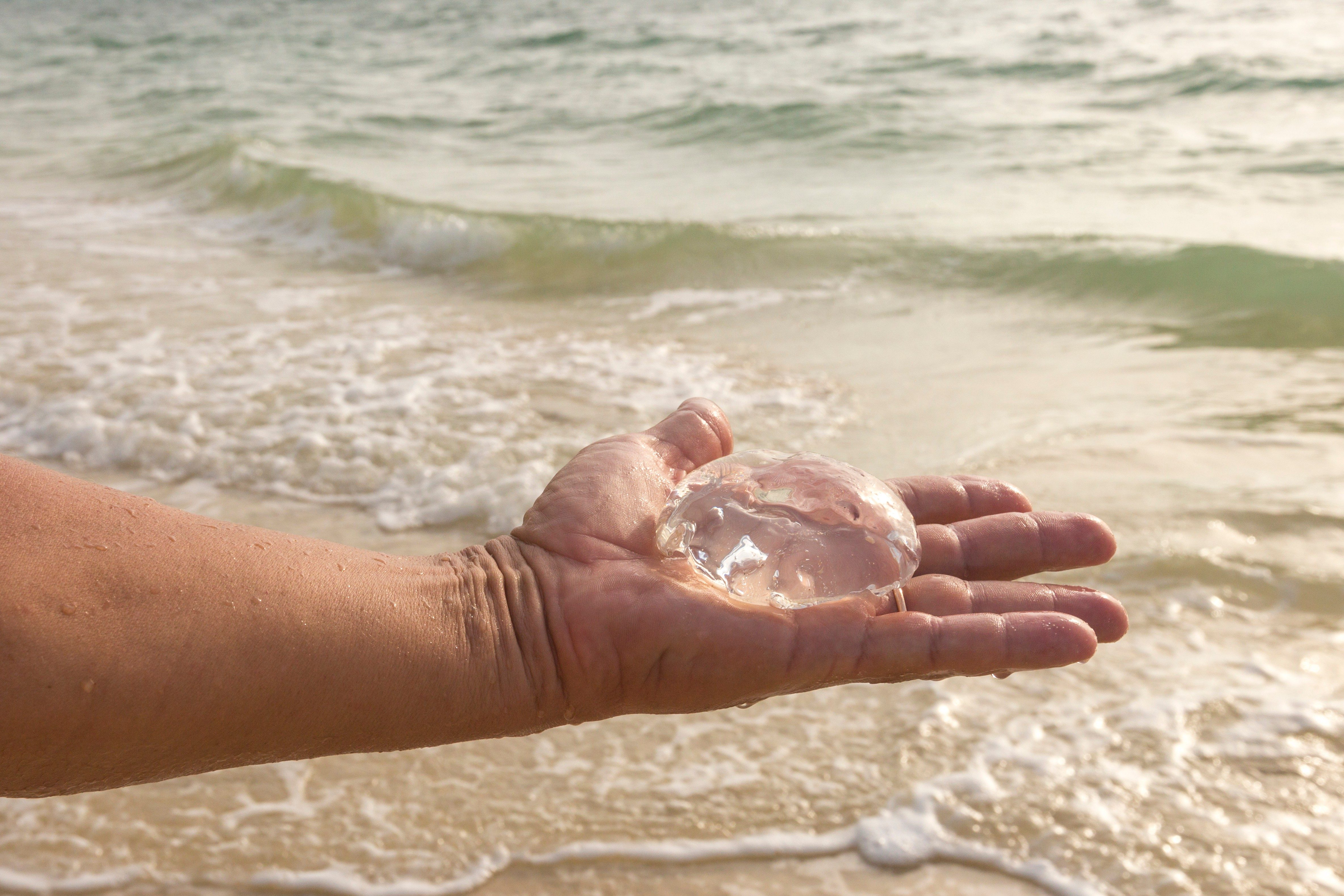 Hand of man holding transparent jellyfish on the background of tidal waves of Andaman Sea and yellow fine sand of a beach on desert island in Thailand. Underwater wildlife of tropical seas - jellyfish