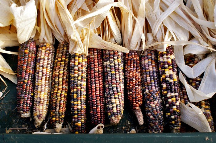 A row of Indian corn.