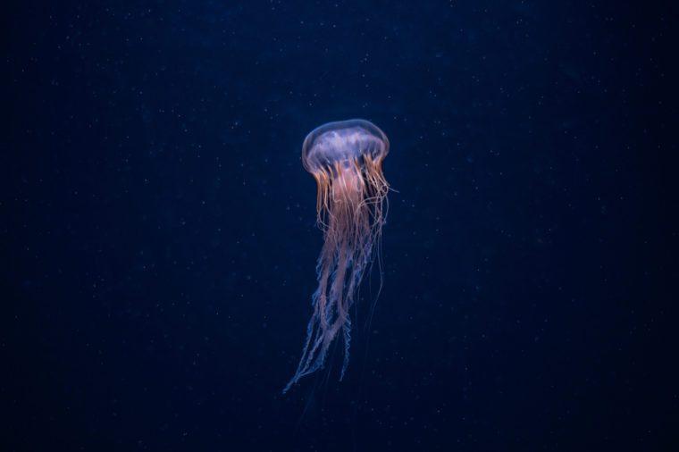 colorful jellyfish dancing