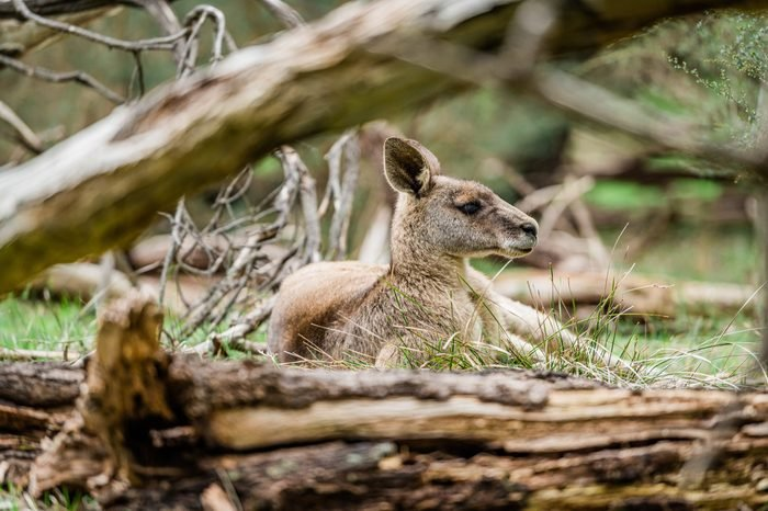 Small cute kangaroo in the park