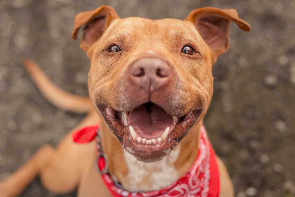 10 Shelter Dogs Who Saved Their Owners' Lives