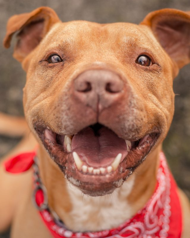 Bubba, a dog I photographed for a Northern California animal shelter, finally found his home after spending the better part of a year in a kennel. He is free!