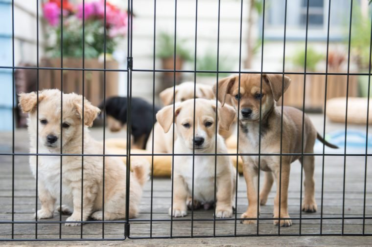 What Animal Shelters Desperately Need Right Now | Reader's Digest