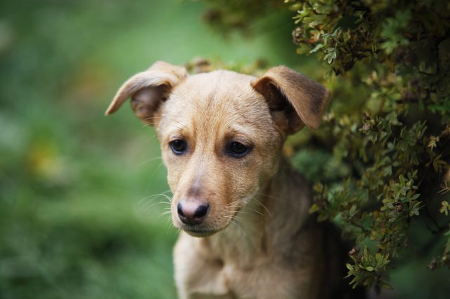 Cute puppy against green grass background. Snout close-up