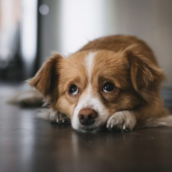 Why You Might Want to Hold Off on Neutering Your Dog