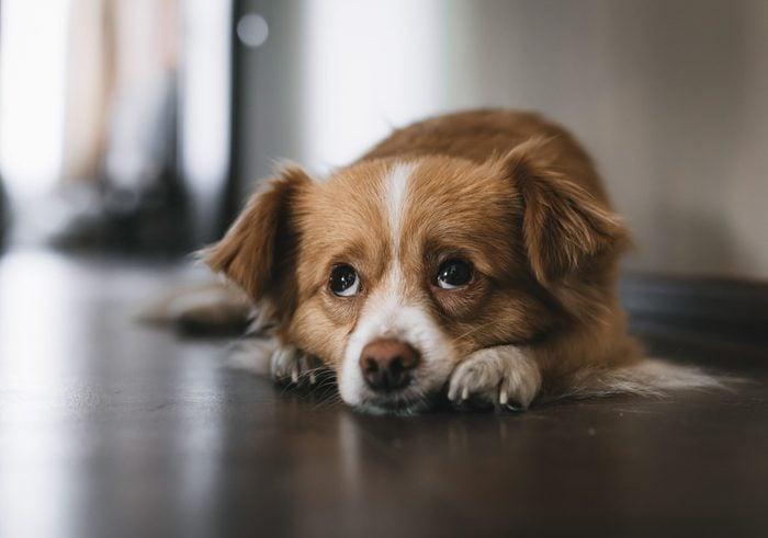 Sad dog face