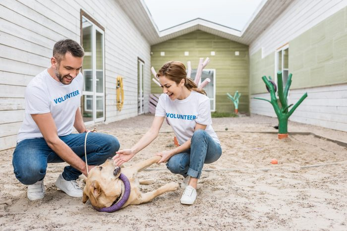 two volunteers of animals shelter playing with labrador dog