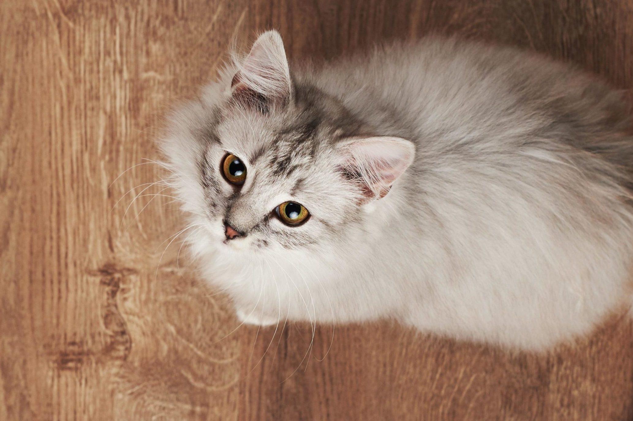 cat overhead
