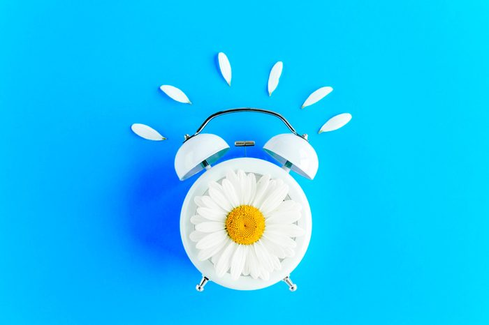 Composition-Summer time from chamomile flower and clock on blue background. Flat lay, top view