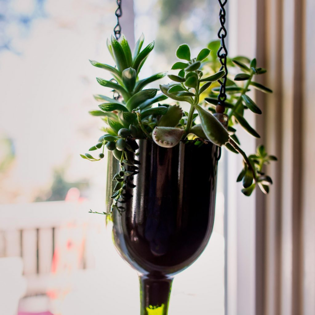 A succulent hangs in the light of a window in wine bottle planter